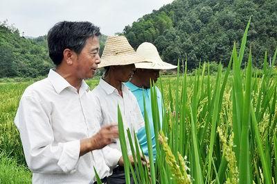江西婺源财政加大投入扶持水稻良种繁育